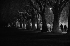 Coming Home for Christmas: Spencer Park Coventry West Midlands UK (Kangaroobie...) Tags: christmas street uk light bw home monochrome wa