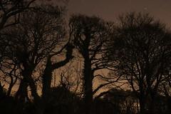 IMG_2563 (forthvalley) Tags: longexposure trees night stars scotland fife