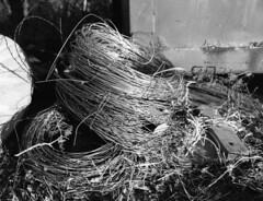 Coiled Wire (keith.derickson) Tags: ranch blackandwhite 120 film fence wire freestyle farm 11 d76 bronica 200 medium format ultra 646 aristaedu etrs zenza ei100