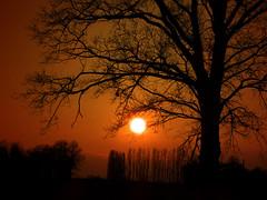 IMG_3986 sunset tree (pinktigger) Tags: sunset italy tree landscape countryside italia tramonto day country friuli fagagna atardacer feagne mygearandme top25naturesbeauty pwpartlycloudy
