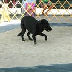DSCN8465 : Dog going after bird