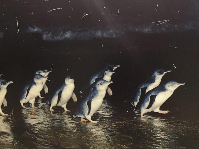 ペンギンパレードと動物ふれあいの旅