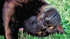 Finalmente Primavera!!  Finally Spring!! (Konny ;-))) Tags: cat katze gatto gato tenderness zartheit tenerezza tendresse fragility fragilité fragilità zerbrechlichkeit fragilidad fragilidade delicadeza delicacy