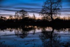 Reflection at twilight (Maria Eklind) Tags: horizon ribersborg nature himmel spegling sweden outdoor dusk ribban beach öresund malmö strand tree twilight ocean sky water ribersborgsstranden öresundsparken horisont reflection skånelän sverige se