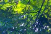brilliant reflection of trees on pond (heroyama) Tags: water pond nature sunshine shadow green texture tree picture park japan tokyo brilliant abstract image 東京 reflection 反射 水 緑 自然 森 森林 アブストラクト 水面 輝き 光 light 枝 branch 揺れ