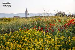 The lighthouse. (Andreas Iacovides) Tags: lighthouse landscape spring pafos paphos canon eos 5d mark iii