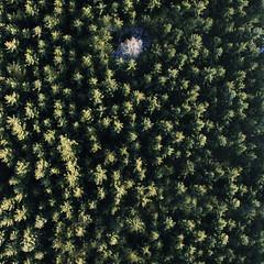 lost (Philipp Sarmiento) Tags: travel philipp sarmiento photographer explorer canon 5d mark3 dji phantom 3 landscape drohne forest arbersee bavaria regensburg