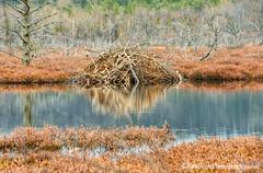 Beaver Lodge ... ice free (Ken Scott) Tags: beaverlodge leelanau michigan usa 2017 april spring 45thparallel hdr kenscott kenscottphotography kenscottphotographycom freshwater greatlakes lakemichigan sbdnl sleepingbeardunenationallakeshore voted mostbeautifulplaceinamerica lodge