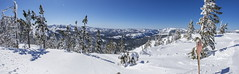 Snowy Soda Springs basin from top of Mt Disney pano1-01 3-1-17-Pano (lamsongf) Tags: donnersummitarea snow winter skiing sugarbowl