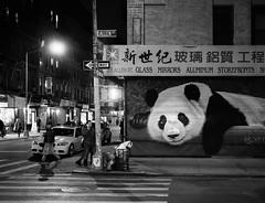 Paws for effect (Panda1339) Tags: 28mm usa summiluxq monochrome panda nyc allenstreet streetphotography manhattan blackandwhite chinatown leicaq new york leica