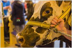 _PPD9340a (duport.patrick) Tags: vache cow fair salon agricole agriculture paris versailles porte patrick duport gosier bobigny international nature lait milk
