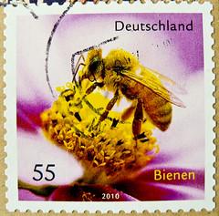 great stamp Germany € 55c Honigbiene (apis mellifera, honeybee, bee, Biene, ミツバチ, abeilles, honungsbi, abeja de la miel, 蜜蜂, медоно́сная пчела́) timbres Allemagne  우표 독일 유럽 sellos Alemania selos Alemanha γραμματόσημα Γερμανία frimerker Tyskland markica (stampolina, thx for sending stamps! :)) Tags: allemagne 우표 독일 유럽 sellos alemania selos alemanha γραμματόσημα γερμανία frimerker tyskland markica njemačka pullari almanya スタンプ ドイツの ヨーロッパ postzegels duitsland francobolli stamps briefmarke briefmarken postzegel zegel zegels марки टिकटों แสตมป์ znaczki frimärken 邮票 طوابع bollo francobollo bolli bee biene abeilles honey honig apismellifera honeybee ミツバチ honungsbi abejadelamiel 蜜蜂 медоно́снаяпчела́ honigbiene gelb yellow flower blume bienen