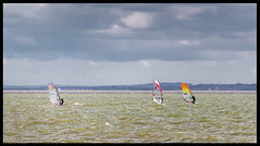 Racers (exreuterman) Tags: water watersport surfing southend essex thames surfers windsurfers windsurfing racing wind windy telephoto sea seaside pleasure canon sl1 100d