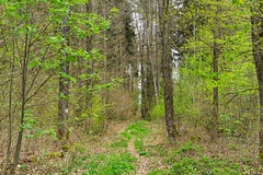 In the wood (Burnett0305) Tags: a7ii a7markii a7mii baum blatt blätter bäume frühling grün landscape landschaft landschaftnatur laub moos natur nature pflanzen sel55f18z sony sonyalpha7ii sonysonnartfe55mmf18za spring wald country foliage forrest green leaves moss plants tree wood