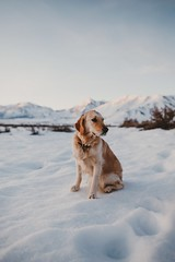 dog pose (R A M A L A M ▲ S A M D O N G) Tags: mammothlakes california unitedstates poppymoose