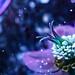 Dancing in Moonlight (Don Komarechka) Tags: flower christmasrose buttercup ultraviolet uv fluorescence uvivf macro fisheye
