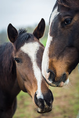 love (Jen MacNeill) Tags: horse horses equine photography stable farm love thoroughbred jennifermacneill jennifermacneillphotography