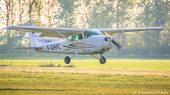 Landing at LFQL (Alexandre D_) Tags: canon eos 70d sigma sigma120400mmf4556dgapooshsm 120400mm spotting spotter plane aircraft airplane airport aerodrome avion aviation cessna skyhawk lens bénifontaine lfql sunset light sun landing nord pasdecalais france hautsdefrance 172 cessna172 grass green flying fly atterrissage