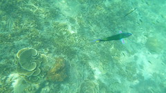 Ao Nang - Snorkelling - Coral and Fish (Paul_Jean) Tags: andamansea snorkelling aonang krabi thailand