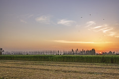 Sunset in Village.............. (Rambonp:loves all creatures of this universe.) Tags: punjab india sunset agriculture sugarcanecrop green red blue sky landscape sun birds trees wallpaper canon chandigarhoutskirt