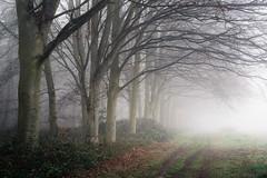 Blickling Wood 28/03/2017 (Matthew Dartford) Tags: blickling bokeh fog forest misty mistytree norfolk path pathway wood woods