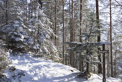 DSC01857 (igor_shumega) Tags: зима снег природа пейзаж лес дерево туризм прогулки отдых