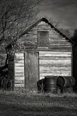 storage shed in B&W (jrmax_51) Tags: monochrome blackwhite alberta canada farmbuilding barnboard