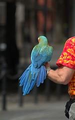 Macaw (swong95765) Tags: bird macaw parrot pet arm bokeh guy