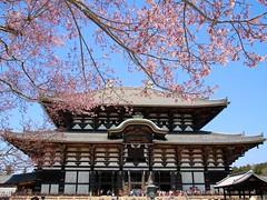 Nara / Todai-Ji - Temple du grand Bouddha (Charles.Louis) Tags: japon printemps nature végétation environnement patrimoine fleur floraison cerisier arbre