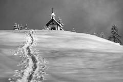 springsnow (bernd.kranabetter) Tags: goldegg meisltein frühling spring snow schnee cold