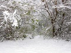 IMG_2821 (sjj62) Tags: s90 snow snowscape lith lakeinthehillsil winter winterscape
