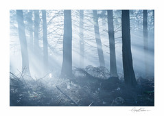 Woodland Light (George-Edwards) Tags: landscape forest wood woodland trees winter seasons sunrise morning sun light beams rays mist fog nature countryside rural outdoor wildlife dawn daybreak cold blue frost berkshire england georgeedwards
