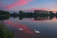 Sunset and swans (Metal Maik) Tags: thielenburgersee schwan schwäne swan swans sonnenuntergang sunset mond moon see lake wasser water spiegelung reflection wolken clouds natur nature vögel birds wasserlandschaft waterscape dannenberg lüchowdannenberg wendland elbtalaue niedersachsen lowersaxony norddeutschland northerngermany deutschland germany europa europe canon maikrichter metalmaik maikrichterfotografie maikrichterphotography maik richter landschaft landscape eos 70d eos70d canoneos70d canon70d