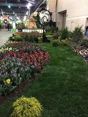 2017-03-10_9392i_amand (lblanchard) Tags: 2017flowershow displaygarden amand