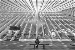 Waiting for a train (Bert Kaufmann) Tags: belgium belgië wallonië wallonia luik liège lüttich liègeguillemins luikguillemins guillemins santiagocalatrava calatrava architecture architectuur railway railwaystation station gare bahnhof zwartwit blackwhite zug trein train trains treinen