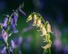 Albino Bluebell (aj_nicolson) Tags: closeup greass green nature outdoors white wildflower woodland appicoftheweek albino bluebell bluebells hyacinthoidesnonscripta rare