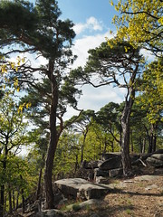 olY/151 .. Pfälzerwald! (m_laRs_k) Tags: omd em5ii olympus forest pfälzerwald