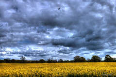 Looming sky (RIS'n'RAS) Tags: hdr highdynamicrange rapeseed fields clouds grey gray yellow sky moody dramatic aircraft cheshire manchester airport