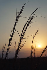 Sunset In The Weed Grass (Kat~Morgan) Tags: sunset field weeds light sonya3000