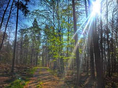 Frühlingswald wie ich ihn mag. (Blende2,8) Tags: schönbuch weg badenwürttemberg reutlingen himmel sonne waldweg bäume wald