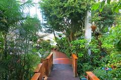Key West (Florida) Trip 2016 2092Rif 4x6 (edgarandron - Busy!) Tags: florida keys floridakeys keywest butterflyhouse keywestbutterflyandnatureconservatory