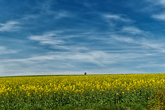 """Walking Spring"" (helmet13) Tags: d800e raw people walker spring landscape agriculture rapeseed bluesky clouds silence peaceful simplicity sunshine 100faves world100f aoi heartaward peaceaward platinumpeaceaward"