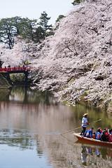Sakura viewing boat (gemapozo) Tags: hirosakicastlebotanicalgarden sakura hirosakicity pentax cherry blossom k1 japan aomori 弘前市 青森県 日本 smcpentaxdfa28105mmf3556eddcwr さくら 桜 弘前公園 お堀 花見船