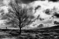 wind blown tree (robin denton) Tags: tree trees moors northyorkmoors osmotherley yorkshire northyorkshire bw blackwhite blackandwhite monochrome clouds sky weather wind