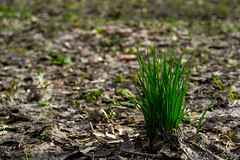 The new life (anton_frolov) Tags: nature green grass new life landscape spring outdoor russia tomsk sony a6000 leaf bokeh