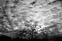 tree and clouds (senemanli) Tags: tree clouds blackandwhite balck sky landscape animal bird square still life sillhoutte monochrome solitery soliterytree bw treegiant tales weather turkey istanbul nature