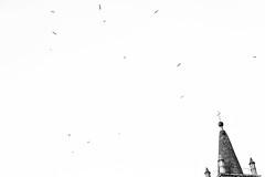 Flock around (lorenzoviolone) Tags: agfa scala 200 bw black white d5200 dslr monochrome nikon reflex tower vsco vscofilm wings architecture birds church clear sky cross event2017chinesenewyear flying seagulls silhouettes streetphoto streetphotobw streetphotography walk:rome=jan2017 agfascala200 blackwhite blackandwhite nikond5200 clearsky roma lazio italy