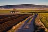 Comarca de Jiloca (Aicbon) Tags: verde jiloca tornos bello gallocanta lagunadegallocanta atardecer sunset sunrise campos fields camino camins spain espanya españa aragon teruel zaragoza