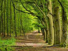 path. (angsthase.) Tags: green forest germany deutschland nrw grn ruhrgebiet dortmund 2012 ruhrpott mft micro43 olympuspenepl1 olympusm45mmf18