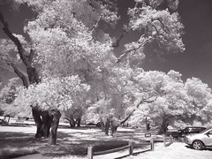 Infrared Park (The Digital Story) Tags: bw infrared derrickstory